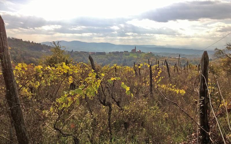 datiranje brzina šumskih brda crno-bijelo druženje u gautengu